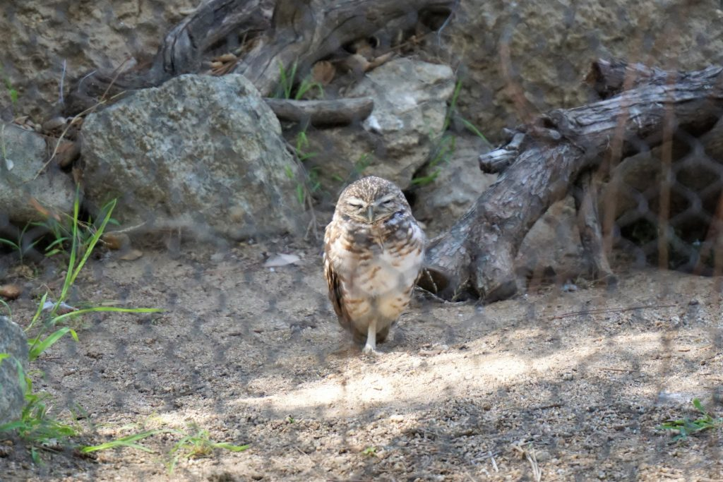 owl in safari park
